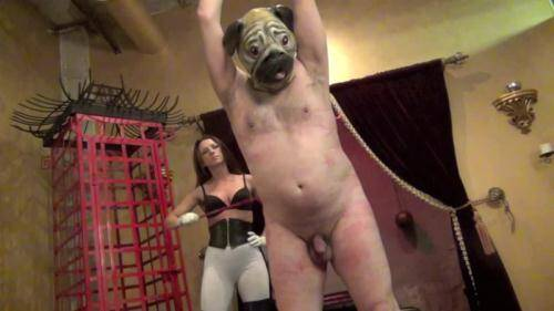 Mistress Bella Blackhart - DISCIPLINING THE PUG PART 3 [HD, 720p] [Clips4sale.com] - Femdom