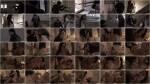 BoobDay: Anissa Kate - Sniper [SD] (232 MB)