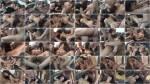 MyDirtyHobby: Kamikatzerl - Mein TEENY-GANGBANG Traum !!! Sandwich zum 18. Geburtstag [FullHD] (215 MB)