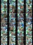 MyFriendsHotMom: Lisa Lipps - Gorgeous Breasts Lovely Lisa (2013) SD 480p
