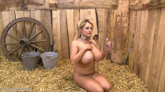 Katie - Getting settled in the barn [FullHD 1080p] HuCows.com