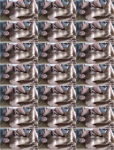 Lara CumKitten - Soo muss nachbarschaft - Abgefickt mit creampie [FullHD 1080p] MDH