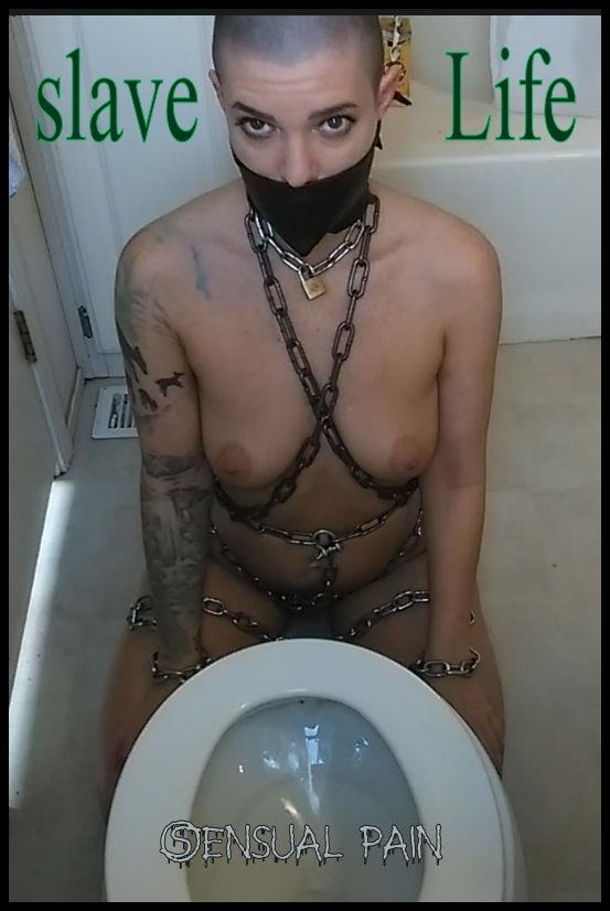 Scat Video: Amateur - slave Life - Cle  aning the Toilet (HD/2016)