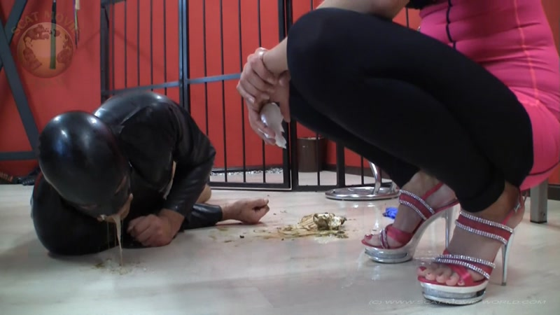 Shit, vomit, piss and spit for the living toilet - Femdom Scat (SCAT / 20 Oct 2016) [FullHD]