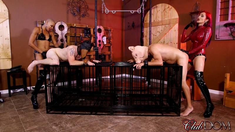 ClubD0m.com: Qandisa & Amadhy Pig StrapOn [FullHD] (675 MB)