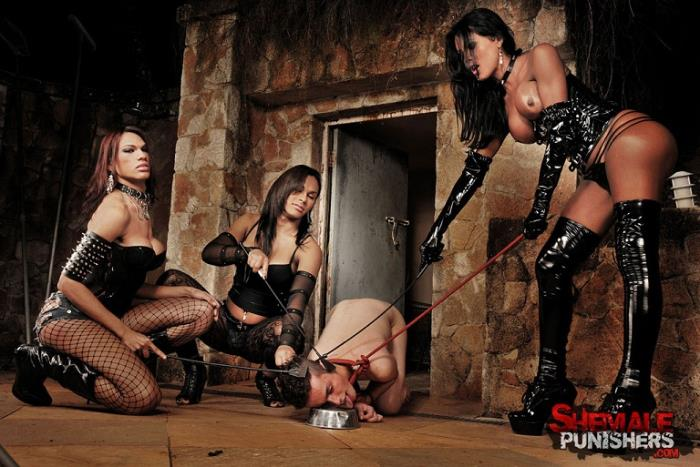 ShemalePunishers.com/TrannyPack.com - Mylla Pereira, Luciana Foxx, Thayla Andrade - HARDCORE [2019 HD] (Humiliation, BDSM, Domination, Shemale, Anal, GangBang, Group)